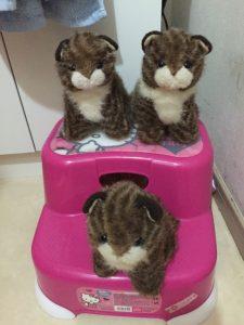 3匹の猫…